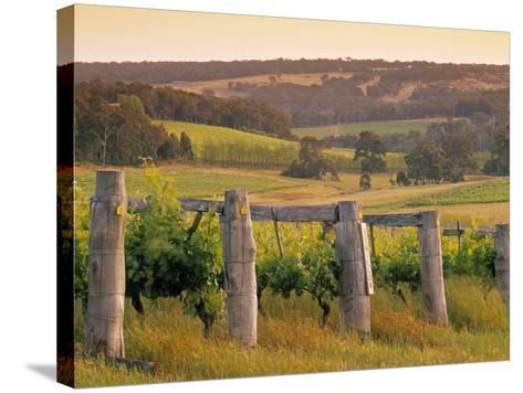 Vineyard, Margaret River, Western Australia, Australia-Doug Pearson-Stretched Canvas Print
