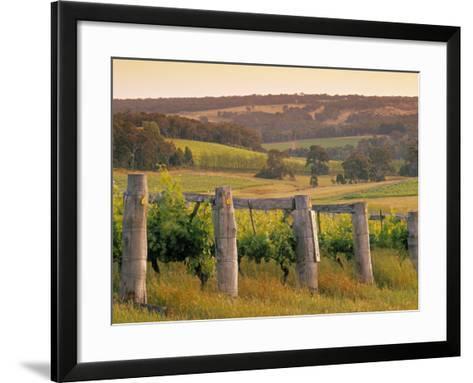 Vineyard, Margaret River, Western Australia, Australia-Doug Pearson-Framed Art Print