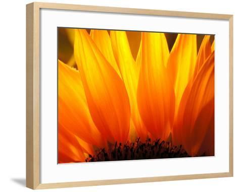 Sunflower-Nadia Isakova-Framed Art Print