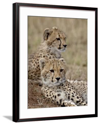 Two Cheetah Cubs, Masai Mara National Reserve, Kenya, East Africa, Africa-James Hager-Framed Art Print