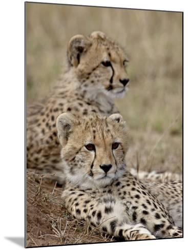 Two Cheetah Cubs, Masai Mara National Reserve, Kenya, East Africa, Africa-James Hager-Mounted Photographic Print