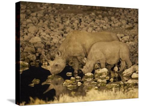 Black Rhino, Cow and Calf, Drinking at Night, Okaukuejo Waterhole-Ann & Steve Toon-Stretched Canvas Print