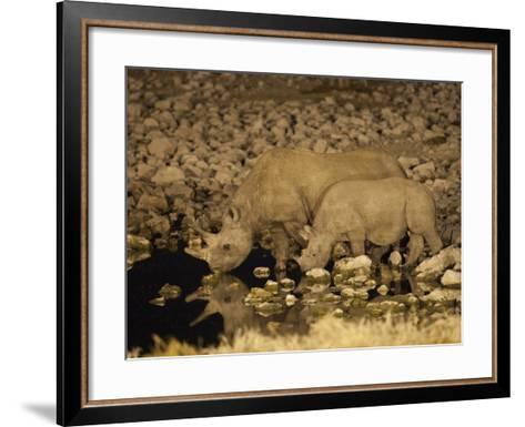 Black Rhino, Cow and Calf, Drinking at Night, Okaukuejo Waterhole-Ann & Steve Toon-Framed Art Print