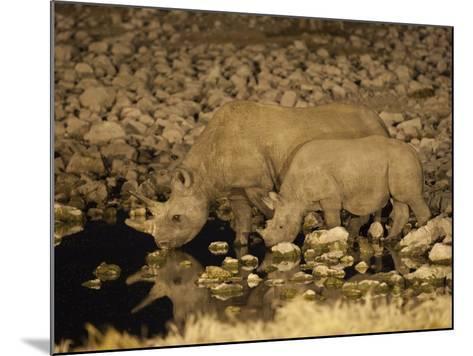Black Rhino, Cow and Calf, Drinking at Night, Okaukuejo Waterhole-Ann & Steve Toon-Mounted Photographic Print