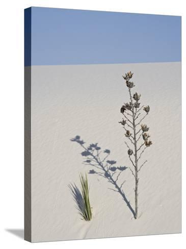 Yucca on Dune, White Sands National Monument, New Mexico, United States of America, North America-James Hager-Stretched Canvas Print