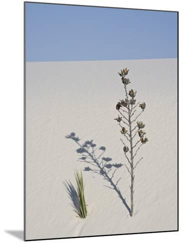 Yucca on Dune, White Sands National Monument, New Mexico, United States of America, North America-James Hager-Mounted Photographic Print