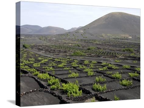 Vineyards of La Geria on Volcanic Ash of 1730S Eruptions, Lanzarote, Canary Islands-Tony Waltham-Stretched Canvas Print