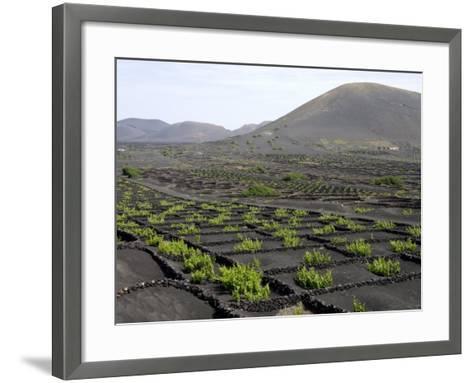 Vineyards of La Geria on Volcanic Ash of 1730S Eruptions, Lanzarote, Canary Islands-Tony Waltham-Framed Art Print