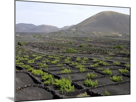 Vineyards of La Geria on Volcanic Ash of 1730S Eruptions, Lanzarote, Canary Islands-Tony Waltham-Mounted Photographic Print
