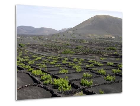 Vineyards of La Geria on Volcanic Ash of 1730S Eruptions, Lanzarote, Canary Islands-Tony Waltham-Metal Print