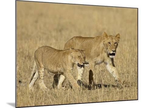 Lion Cubs, Masai Mara National Reserve, Kenya, East Africa, Africa-James Hager-Mounted Photographic Print