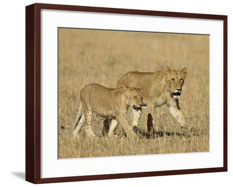 Lion Cubs, Masai Mara National Reserve, Kenya, East Africa, Africa-James Hager-Framed Art Print