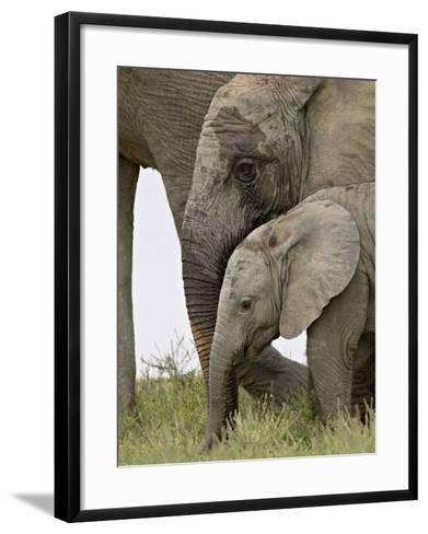 Baby and Young African Elephant, Addo Elephant National Park-James Hager-Framed Art Print