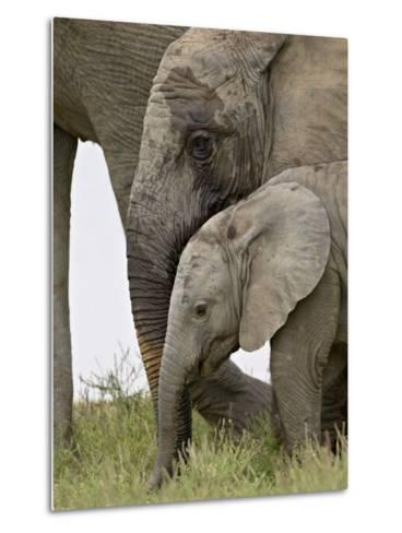 Baby and Young African Elephant, Addo Elephant National Park-James Hager-Metal Print