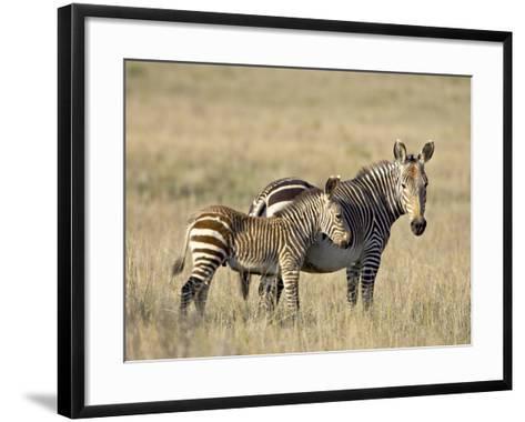 Cape Mountain Zebra Mother and Foal, Mountain Zebra National Park-James Hager-Framed Art Print