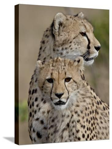 Cheetah Cub and Mother, Masai Mara National Reserve-James Hager-Stretched Canvas Print