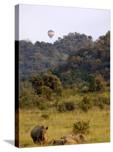 Group of White Rhinos and Balloon, Pilanesberg National Park, Sun City, South Africa, Africa-Peter Groenendijk-Stretched Canvas Print