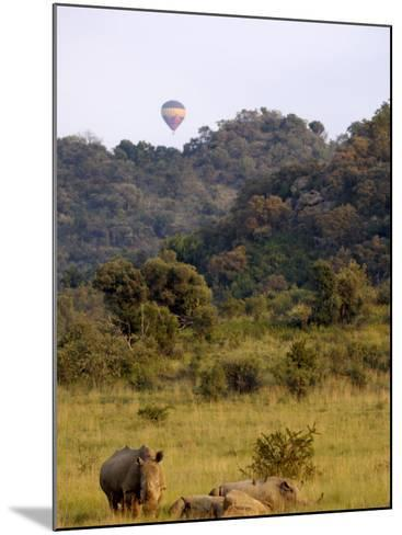 Group of White Rhinos and Balloon, Pilanesberg National Park, Sun City, South Africa, Africa-Peter Groenendijk-Mounted Photographic Print