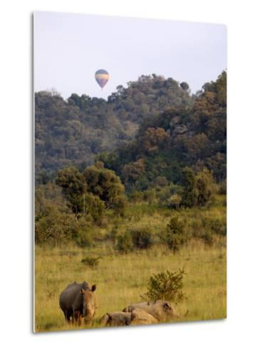 Group of White Rhinos and Balloon, Pilanesberg National Park, Sun City, South Africa, Africa-Peter Groenendijk-Metal Print
