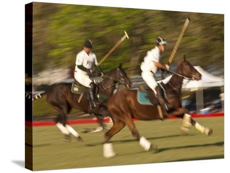 Polo, Houston, Texas, United States of America, North America-Michael DeFreitas-Stretched Canvas Print