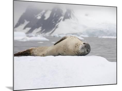 Leopard Seal on Ice, Near Yalour Island, Antarctic Peninsula, Antarctica, Polar Regions-Robert Harding-Mounted Photographic Print