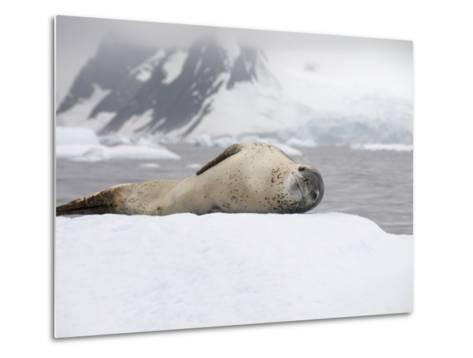 Leopard Seal on Ice, Near Yalour Island, Antarctic Peninsula, Antarctica, Polar Regions-Robert Harding-Metal Print