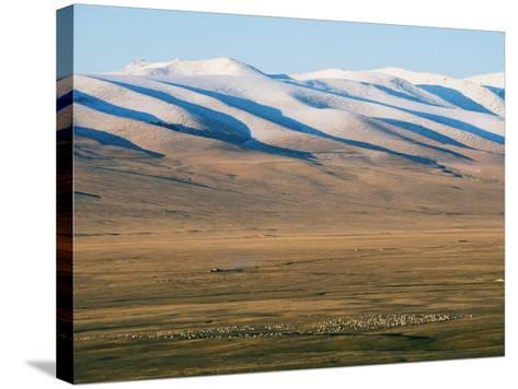 Sheep Grazing on the Plains in Bayanbulak, Xinjiang Province, China, Asia-Christian Kober-Stretched Canvas Print