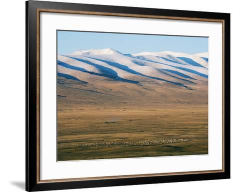 Sheep Grazing on the Plains in Bayanbulak, Xinjiang Province, China, Asia-Christian Kober-Framed Art Print