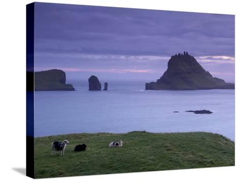 Tindholmur Island Rising to 262 M, and Drangarnir Natural Arch at Sunset, with Sheep, from Vagar-Patrick Dieudonne-Stretched Canvas Print