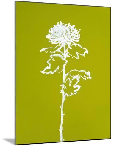 Chrysanthemum I-Filippo Ioco-Mounted Premium Giclee Print