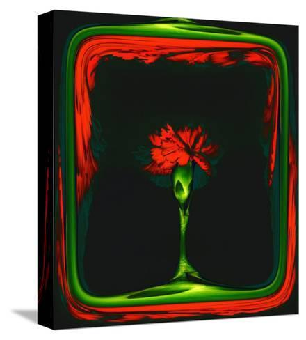 Red Carnation Formalized in a Frame-Winfred Evers-Stretched Canvas Print