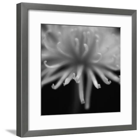 Close-Up of Flower Petals in Black and White-Alfonse Pagano-Framed Art Print