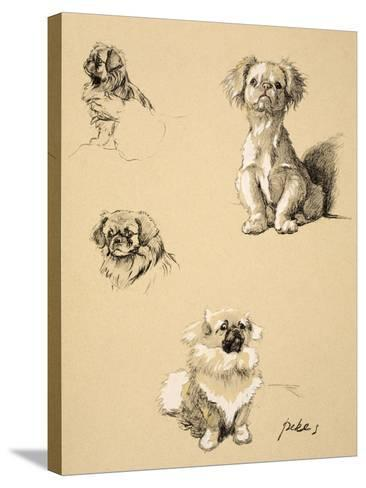 Pekes, 1930, Illustrations from his Sketch Book used for 'Just Among Friends'-Cecil Aldin-Stretched Canvas Print