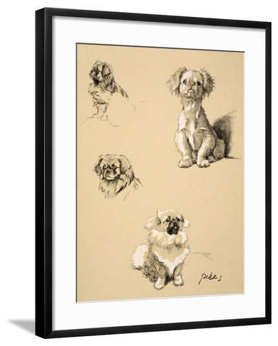 Pekes, 1930, Illustrations from his Sketch Book used for 'Just Among Friends'-Cecil Aldin-Framed Art Print
