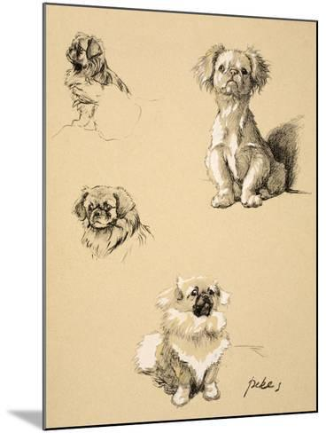 Pekes, 1930, Illustrations from his Sketch Book used for 'Just Among Friends'-Cecil Aldin-Mounted Giclee Print
