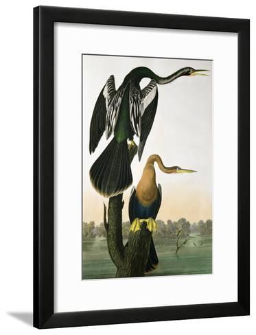 Black-Billed Darter, from 'Birds of America', engraved by Robert Havell-John James Audubon-Framed Art Print