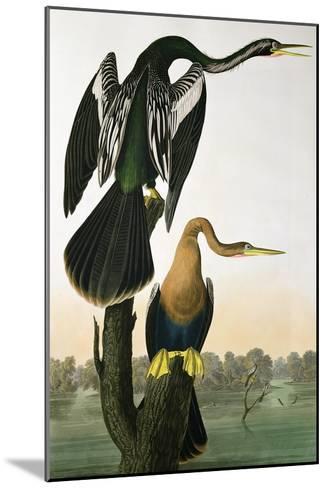 Black-Billed Darter, from 'Birds of America', engraved by Robert Havell-John James Audubon-Mounted Giclee Print
