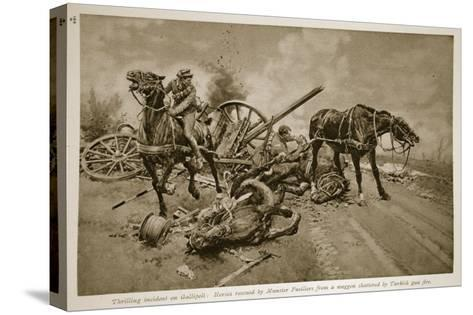Gallipoli: Horses Rescued by Munster Fusiliers from a Waggon Shattered by Turkish Gun Fire, 1914-19--Stretched Canvas Print