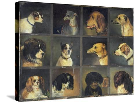 Twelve Favourite Dogs, 1883-Edwin Frederick Holt-Stretched Canvas Print