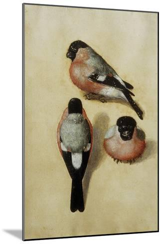Parrot in Three Positions-Albrecht D?rer-Mounted Giclee Print