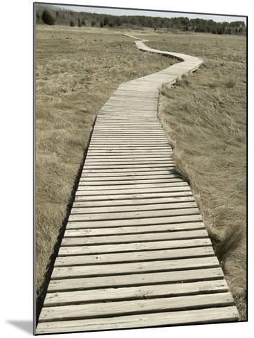Boardwalk across a Tidal Marsh Leading to a Wooden Area at a Wildlife Sanctuary-John Nordell-Mounted Photographic Print