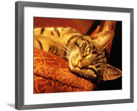 Lazy Cat on the Sofa-Winfred Evers-Framed Art Print