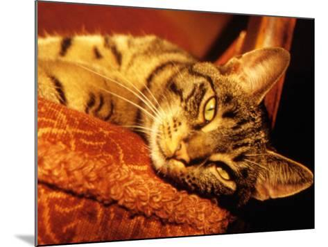 Lazy Cat on the Sofa-Winfred Evers-Mounted Photographic Print