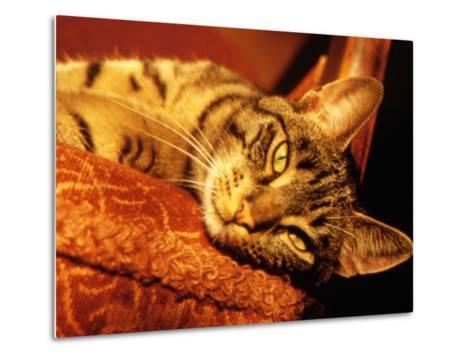 Lazy Cat on the Sofa-Winfred Evers-Metal Print