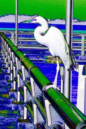 Egret Perched, Florida-Rich LaPenna-Stretched Canvas Print
