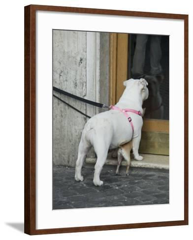 Big Dog with Little Dog Underneath it in Rome, Italy Outside of a Bakery-Andrea Sperling-Framed Art Print