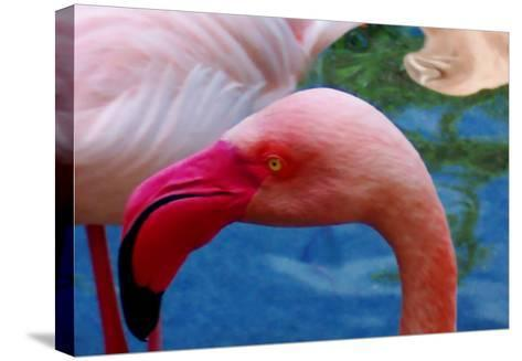 Headsup of Flamingo Bird-Rich LaPenna-Stretched Canvas Print