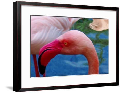 Headsup of Flamingo Bird-Rich LaPenna-Framed Art Print
