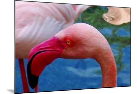 Headsup of Flamingo Bird-Rich LaPenna-Mounted Giclee Print
