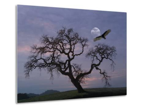 Oak Tree Silhouetted Against Cloudy Sunrise with Partially Obscured Moon and Flying Vulture-Diane Miller-Metal Print